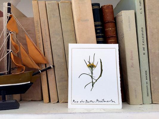 L'herbier de Madeleine©Marc Bellini
